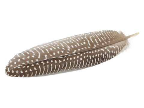 Polka Dot Guinea Fowl Wing Quills