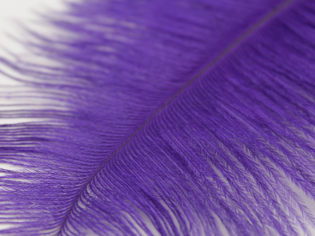 "Purple Ostrich Feathers Drabs (10-12"")"