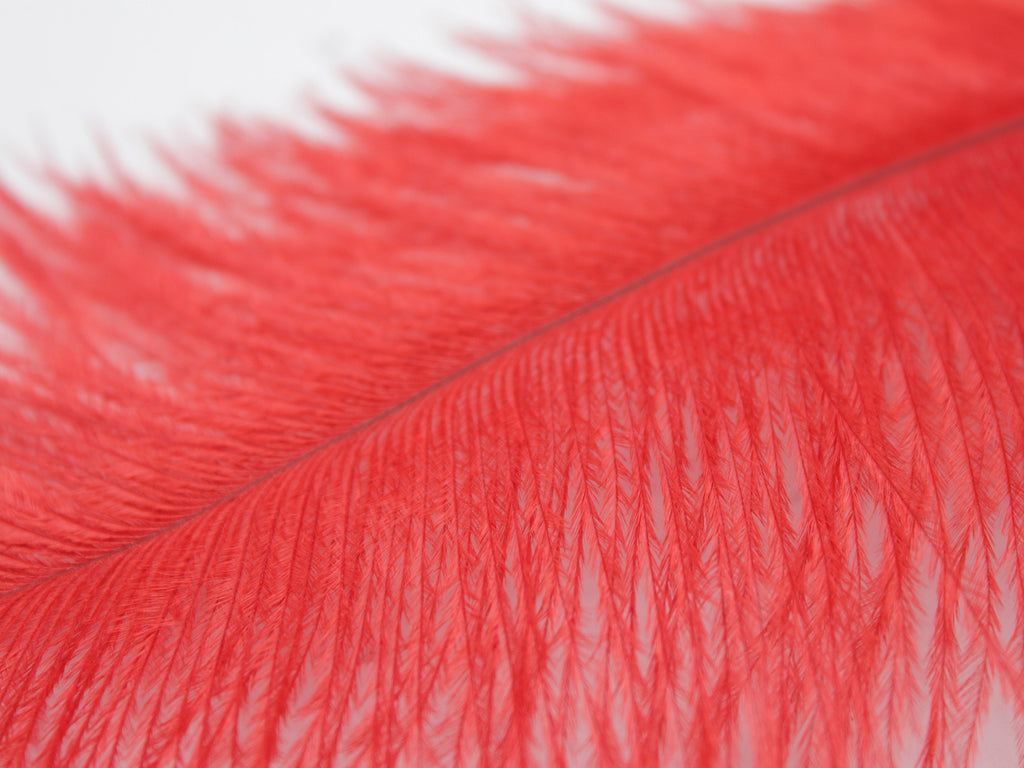 "Red Ostrich Feathers Drabs (10-12"")"