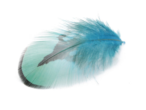 Reeves Venery Pheasant Blue Plumage Feathers