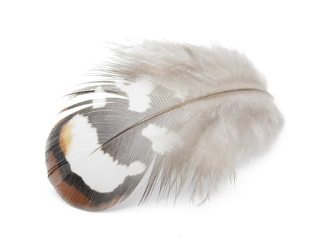 Reeves Venery Pheasant Brown Plumage Feathers