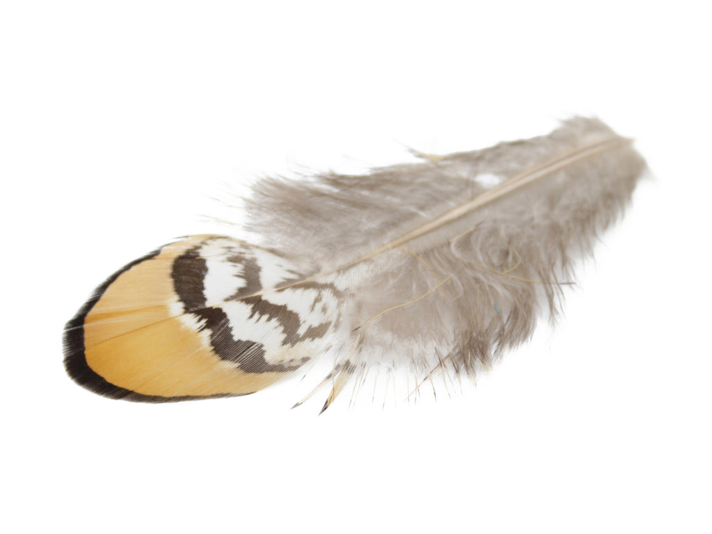 Reeves Venery Pheasant Yellow Plumage Feathers
