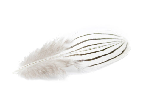 Silver Pheasant Black & White Plumage Feathers