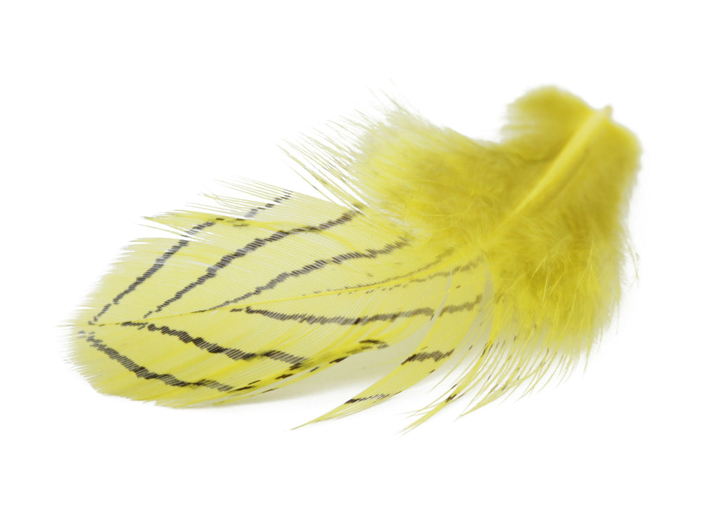Silver Pheasant Yellow Plumage Feathers