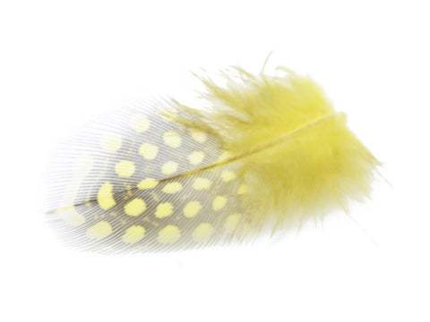 Yellow Guinea Fowl Plumage Feathers