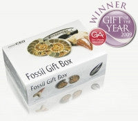 Fossil Gift Box