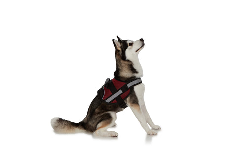 EZ-PET Comfort Reflective Padded Vest No-Pull Reflective Breathable Adjustable Pet Vest with Handle for Outdoor Walking - No More Pulling, Tugging or Choking