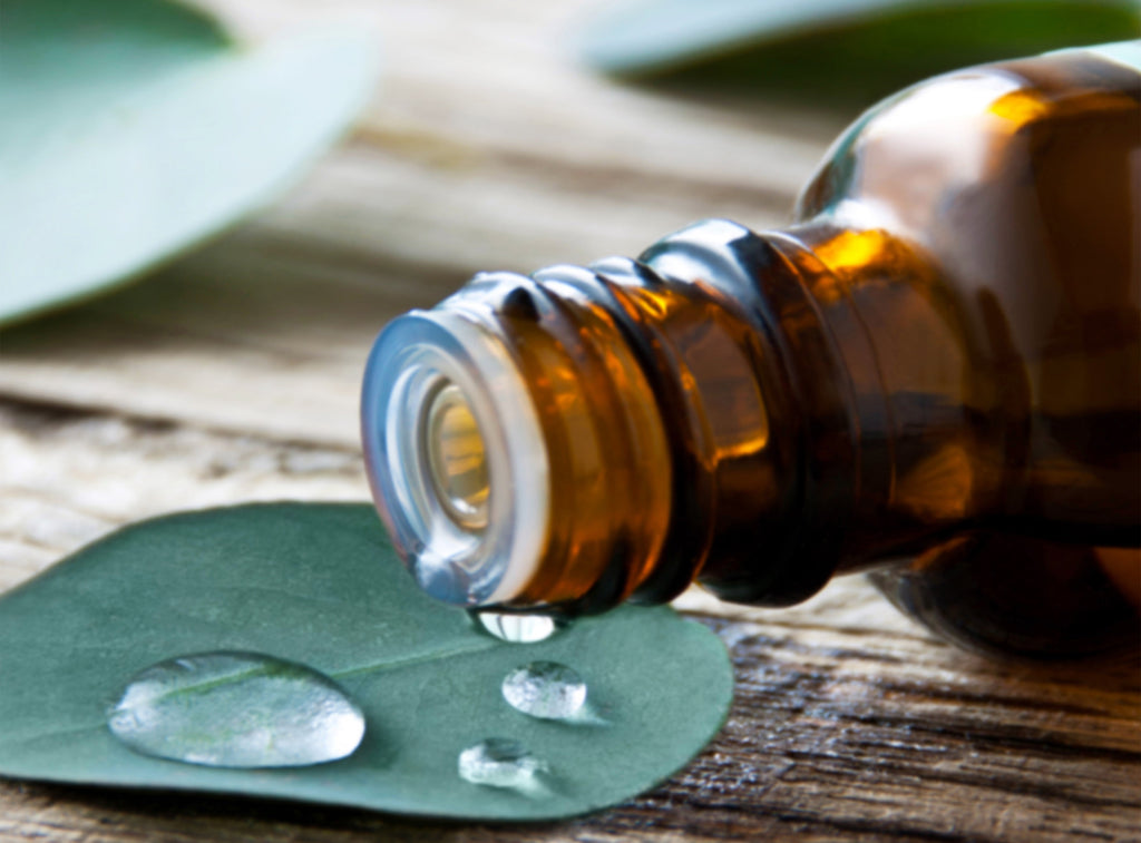 Meet the Plant Eucalyptus - Skin Health