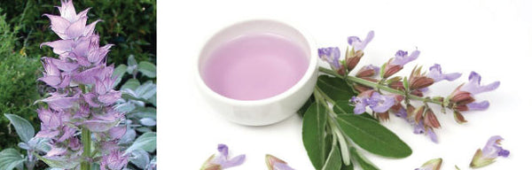Clary Sage Recipes