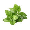 Chinese Mint Herb