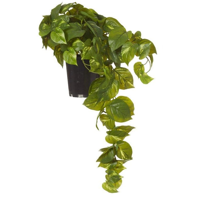 Large Hanging Pothos Garden Pot