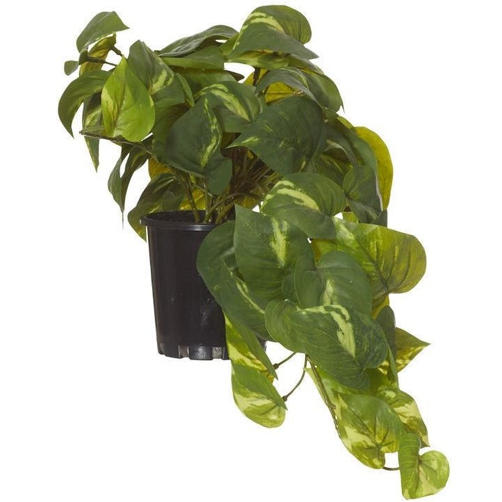 Small Hanging Pothos Garden Pot