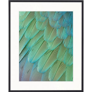 Banbury Feather Collection - Exotic Feather I