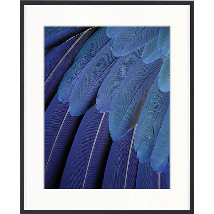 Banbury Feather Collection - Exotic Feather II