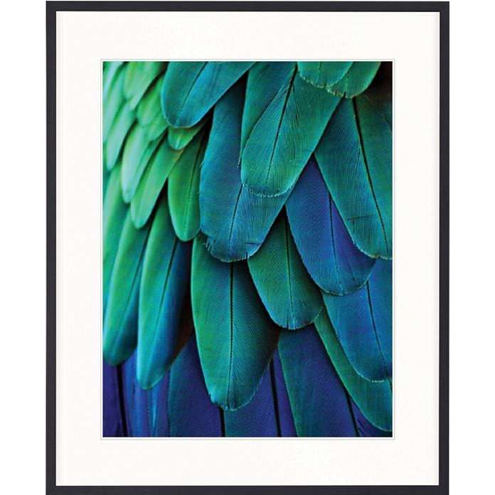 49e7ac40f0a07 Banbury Feather Collection   Hand Framed Print - Exotic Feather IV