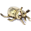 Brass Beetles
