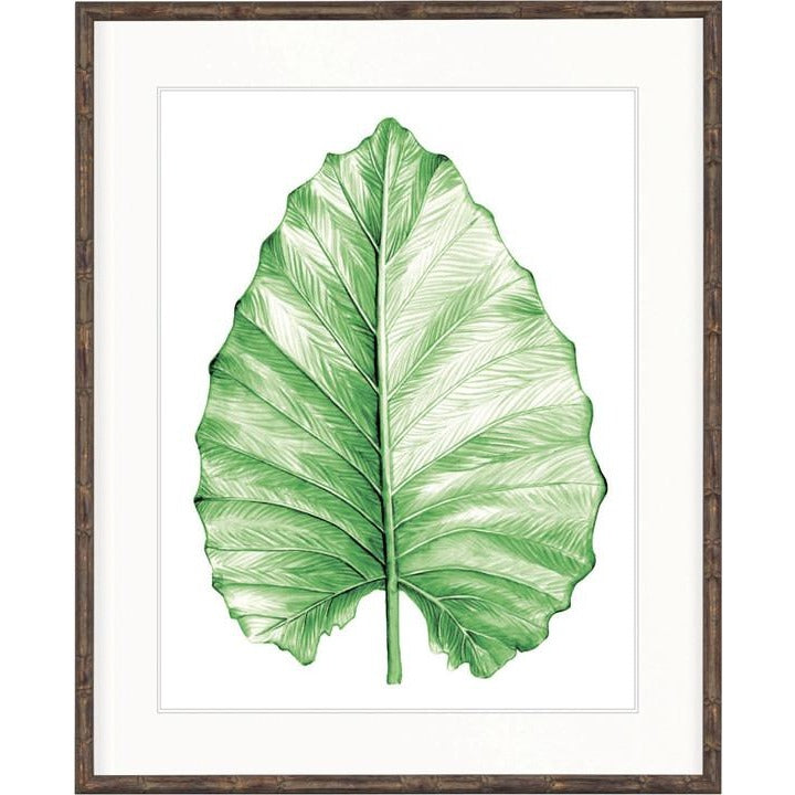 Bangalow Collection - Bangalow Leaf Green III