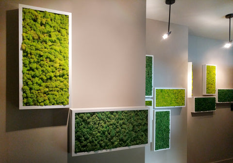 """Installation of 12"""" x 24"""" Moss Wall Art Panel Kit White Frame with Acoustic Reindeer Moss"""