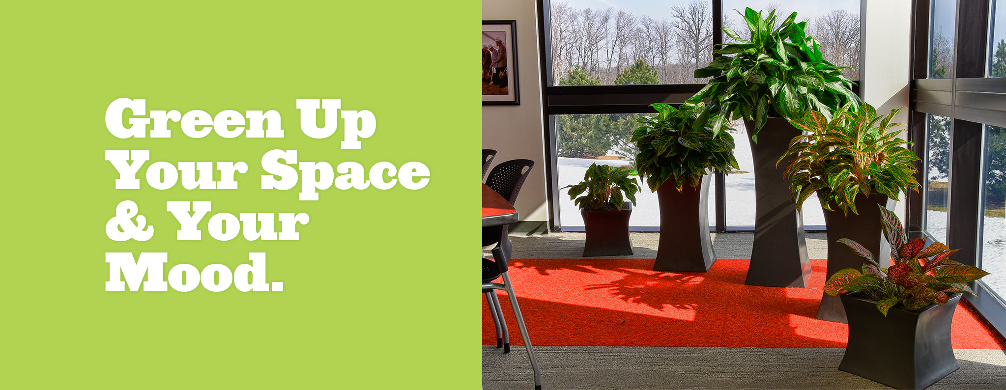 Green up your space and your mood. Botanicus Direct