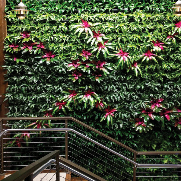 Neoregelis Bromeliads for color in stairway green wall