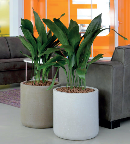 Strong Clay Cylinder Planter in White Sky and Brown Earth