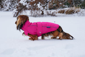 DJANGO - How cold do dogs get in the winter? - djangobrand.com