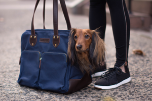 DJANGO - The story of a modern dog carrier bag and the long-haired dachshund who inspired the design - djangobrand.com