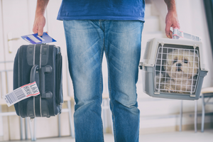 DJANGO Dog Blog - How to Prepare Your Dog for Airline Cargo Travel - djangobrand.com