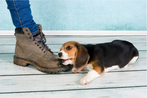 How to Prevent Your Puppy from Nipping and Biting