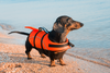 The Best Dog Life Jackets (Product Reviews)