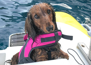The Best Dog Life Jackets and Swimming Vests