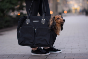 DJANGO Dog Blog - How to Teach Your Dog to Love Riding in a Pet Travel Carrier and Pet Purse - djangobrand.com