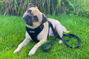 DJANGO Dog Blog - How to measure your dog - djangobrand.com