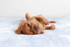 DJANGO Dog Blog - How to Potty Train A Puppy - djangobrand.com