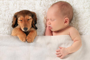 Researchers confirm that babies and kids are healthier when there is a pet in the home