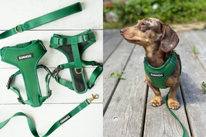 DJANGO Dog Blog - Introducing DJANGO's Adventure Dog Harness and Leash Collection - A high quality, comfortable, durable, stylish, and modern harness and leash set with solid brass hardware - djangobrand.com