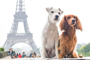Interview: Around the World with Django & Chloe, Instagram's Most Well-Traveled Pups