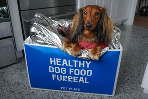 DJANGO Pet Plate Food Review|Our Experience with this Fresh Dog Food Subscription Service.png