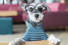 DJANGO Dog Blog - Interview with Remix the Dog, Instagram's Most Stylish Bearded Pupster