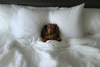 DJANGO: The Best Pet-Friendly Hotels in New York City