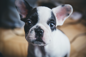 DJANGO - The most popular dog and puppy names