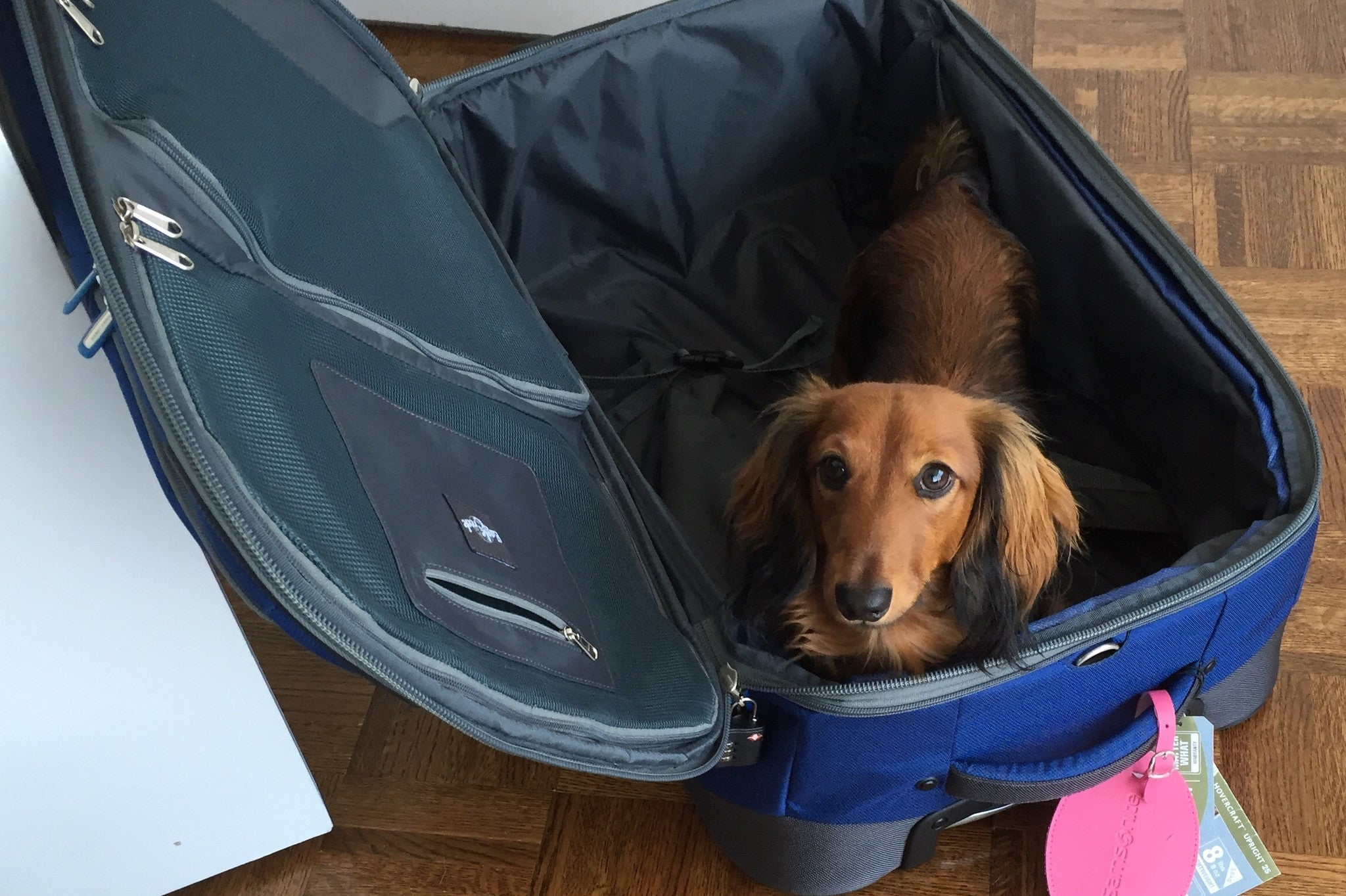 16 Travel Tips for Flying with Your Dog