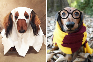 DJANGO - DIY Halloween Pet Dog Costumes 2017 - djangobrand.com