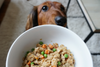 The Best Organic, All Natural, and Grain-Free Dog Foods (2019 Reviews)