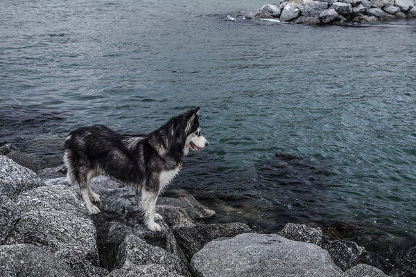 Waterborne Diseases That Put Your Pup At Risk (Dangerous Waters: Part 2)