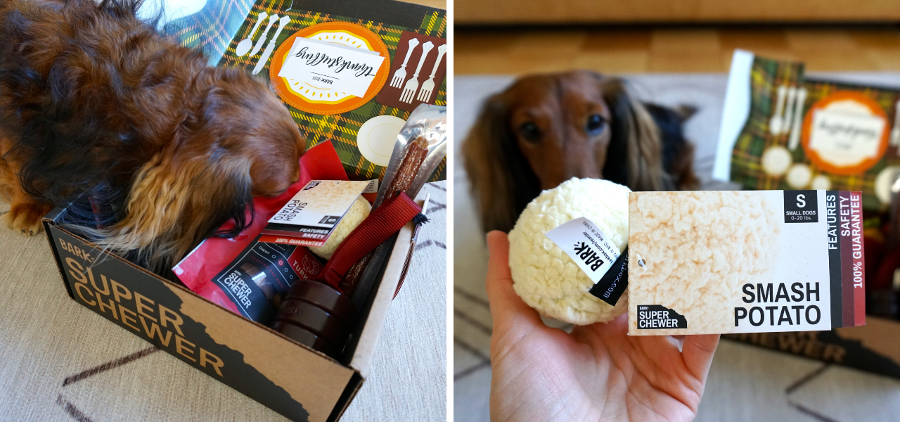 Django's Super Chewer Monthly Subscription Box