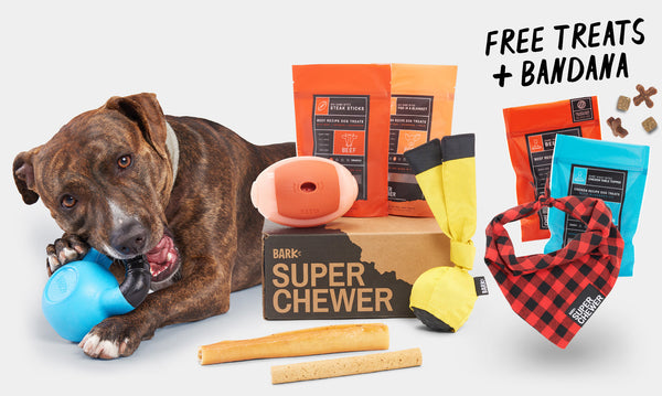 Best Tough Dog Toys - Super Chewer Dog Toy and Treats Review - djangobrand.com