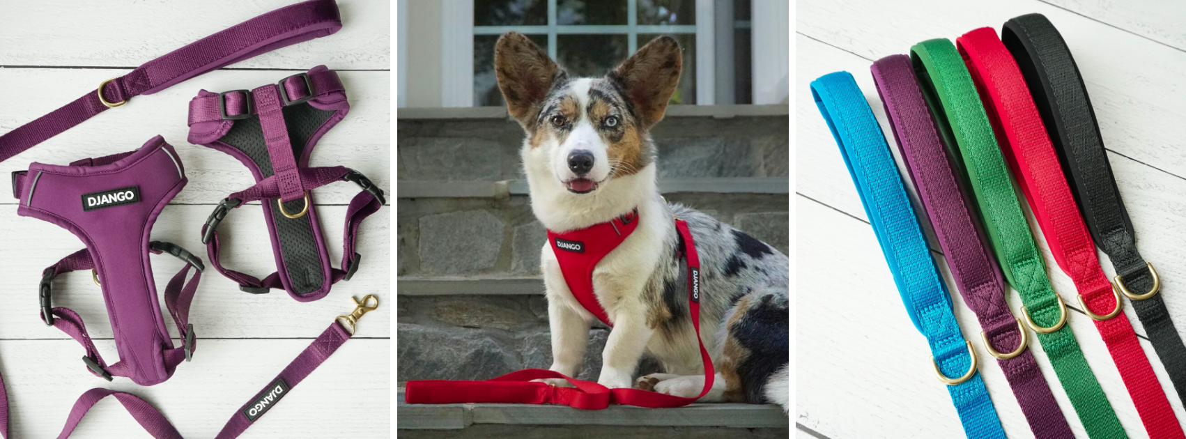 Best dog harness and leash let for corgi dogs and other small and medium sized dog breeds and puppies - djangobrand.com