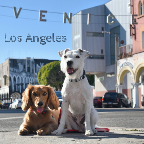 DJANGO Interview - Around the world with Django & Chloe, Instagram's Most Well-Traveled Pups - Venice, California