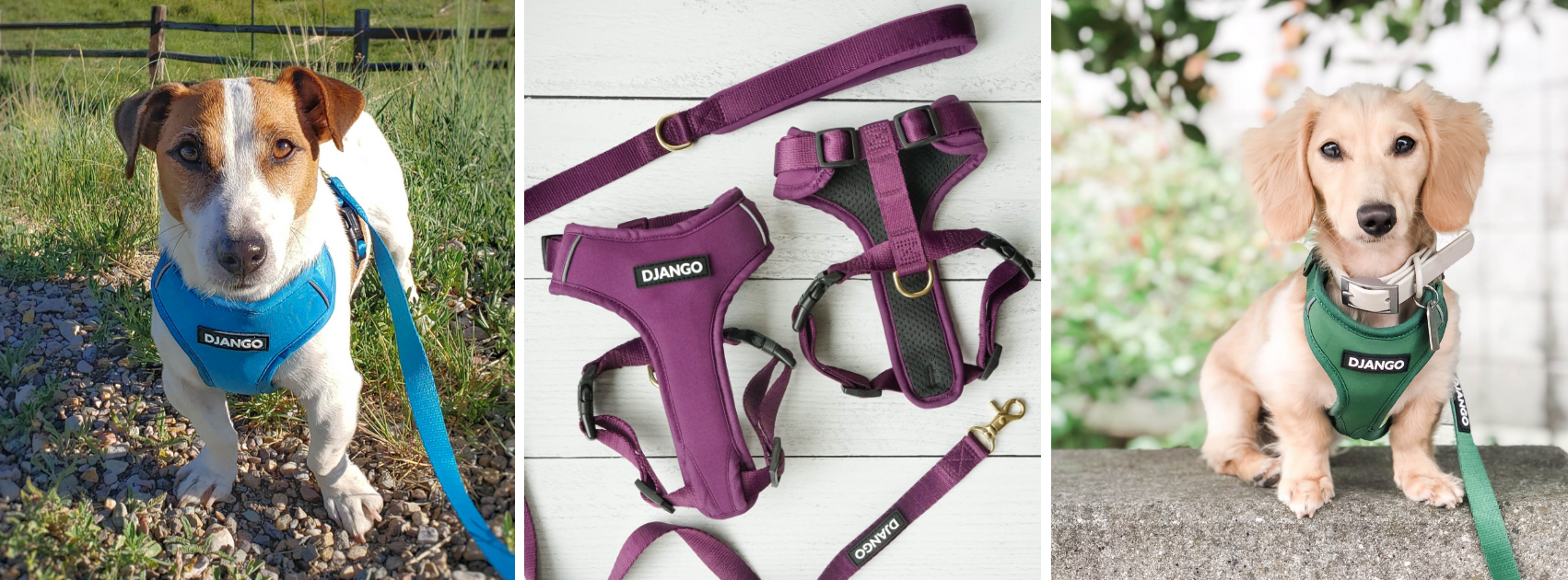 DJANGO Adventure Dog Harness and Leash Collection - djangobrand.com